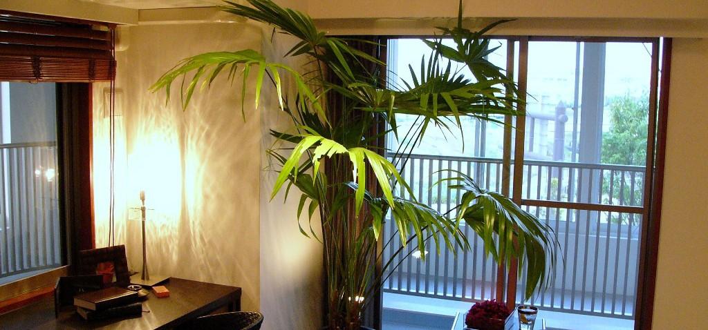 レンタル観葉植物